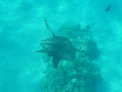 4 Hawaii - MAUI - 081 (Ingo Boemoser) Tags: hawaii oahu maui kauai beaches bigisland gardenisland