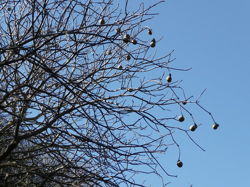 Strange tree, by me