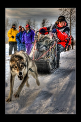 Coming Through... (Akfirebug) Tags: dog snow cold alaska race racing mushing sled hdr dogsledrace tuneup tworivers akfirebug falcetta aliyzirkle justcauseiknowhowmuchcarstenlovesmyhdr