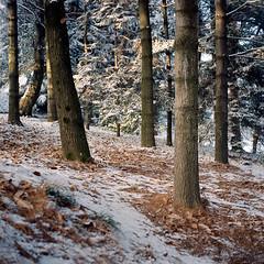 Winter Wood (the circle of trees) (andreafix) Tags: wood winter snow 6x6 film leaves mediumformat kodak mat 124g epson portra yashica c41 v500 sekonic