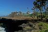 South coast - destroid biotop of Phelsuma inexpectata (ach_gecko) Tags: ocean reunion indian vert lizard gecko chameleon phelsuma lezart borbonica inexpectata