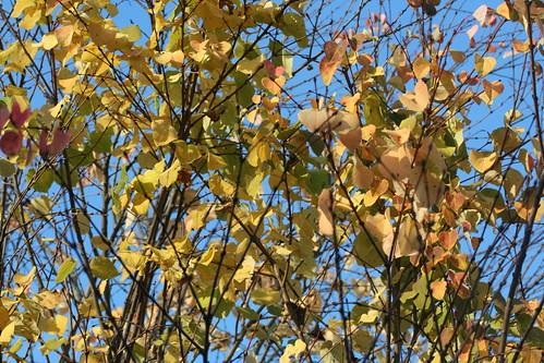 20090919 Edinburgh 20 Royal Botanic Garden 542