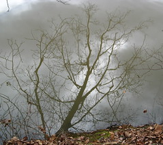 Tree reflected on water's surface Photo