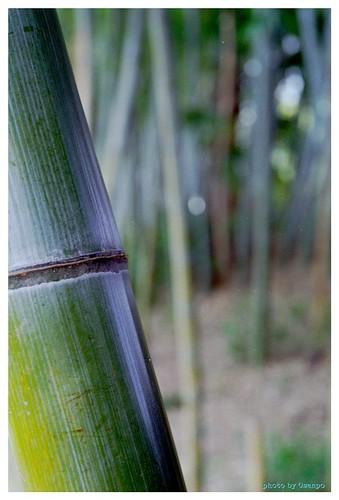 Bamboo 100114 #03