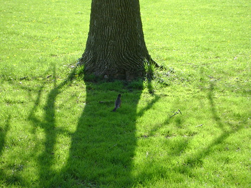 bird_tree_shadow