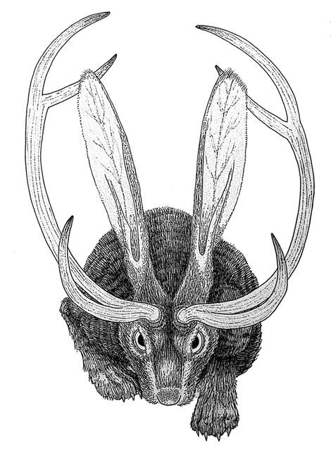 jackalope-sketch