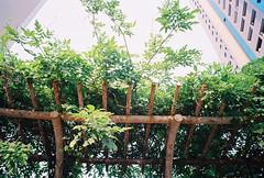(Jingyuer) Tags: film shanghai 2009 4044 f19 naturablack e21mm sunny200
