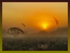 dreams framed (hlh 1960) Tags: morning trees summer sun sol nature field misty sunrise germany landscape deutschland golden soleil framed sommer natur wiese dreams juli grün landschaft sonne bäume sonnenaufgang saarland storch träume platinumheartaward bliestour adebartour