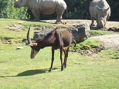 Zoo-parc de Beauval, Saint-Aignan-sur-Cher, Loir-et-Cher. (Only Tradition) Tags: france zoo frankreich frana frankrijk francia franca 41 loiretcher beauval saintaignansurcher franciaorszg 41110  zooparc frana