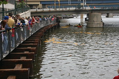 Rubber Duck Regatta - Milwaukee River