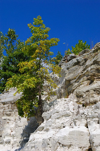 Klondike Park, in Saint Charles County, Missouri, USA - tree on white sandstone cliff