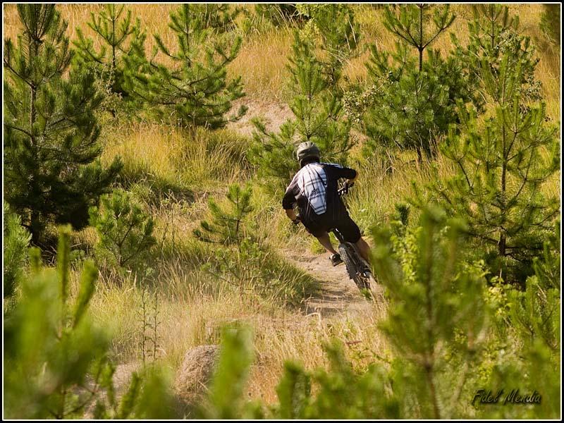 Sergio curveando entre pinos y hierba