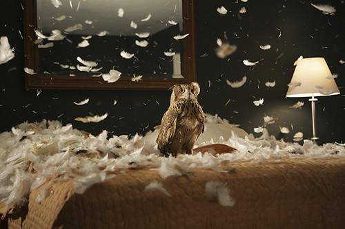 doug aitken owl