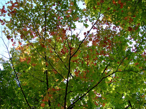 First Signs of Fall 2009