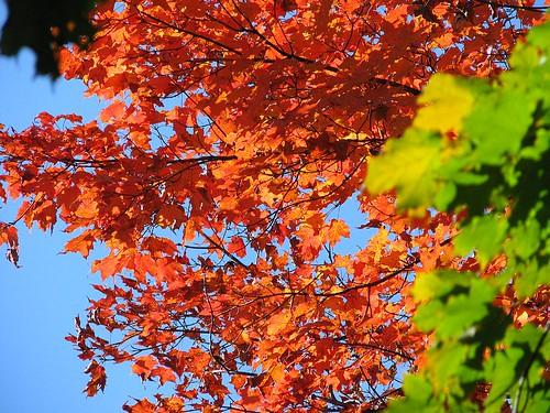 leavesupclose