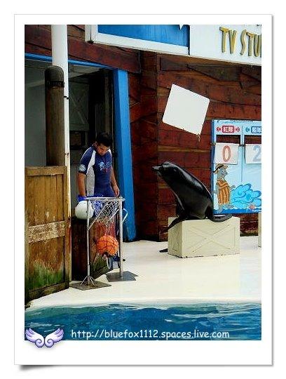 090919-2花宜6輪4日遊_花蓮海洋公園06_探險島-晃晃海獅秀