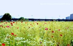 non title (Saraia77) Tags: flower solaris contax139q planart