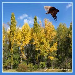 Autumn - PA024126Ts (jm_villarroya) Tags: spain soe supershot bej totalphoto anawesomeshot overtheexcellence jmvillarroya multimegashot vosplusbellesphotos