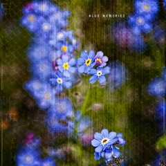 In the practice of tolerance, one's enemy is the best teacher. (Quote by Dalai Lama) (Sashs Kitchen-Studio Photography) Tags: blue art texture square 200 sascha forgetmenot quadrat rueb furz 500x500 insashi mywinners rb artlibre memoriesbook platinumheartaward floralessence damniwishidtakenthat vanagram saariysqualitypictures texturesquared updatecollection ucreleased magicunicornverybest allrightreservedsascharueb allrightsreservedsascharueb sashskitchenstudiophotography