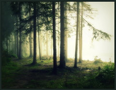 Charmed forest....special for you my dear Visitors! (Bea Kotecka *Come back :) *) Tags: morning mist tree fog forest landscape poland august charmed mga maopolska naturesfinest canoneos30d podhale summer09 500000views dbno platinumheartaward biakariver thesecretlifeoftrees thesuperbmasterpiece beakoteckaphotography zaczarowanylas