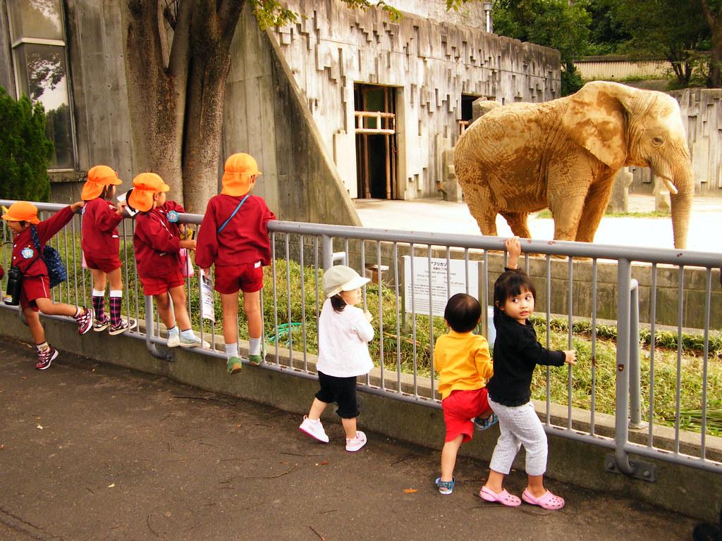 Seven Kids & An Elephant