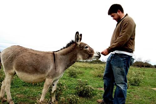 donkey_phil