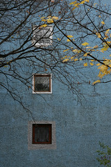 Early Winter Blues (sonofsteppe) Tags: life street city blue windows winter urban house detail building tree art texture leaves wall architecture 50mm early town still hungary mood branch exterior view outdoor budapest blues atmosphere nobody scene surface front architectural explore environment rough piece deciduous exploration thewall bough wintery ilmuro buda wallscape sonofsteppe pusztafia urbanlifeoftrees