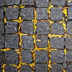 Autumn waffle (ole) Tags: france sol leaves lines yellow square europe pavement gray normandie rue waffle caen ptale carr pav explored