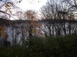 River Fog 2