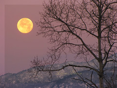 2Dec09-une belle journe qui commence-la lune va se cacher derriere le mont Orford. (Lara-queen) Tags: morning moon canada nature lune sunrise canon ilovenature quebec magog fullmoon naturesbest montorford estrie pleinelune naturesfinest vob settingmoon mountorford colorphotoaward moonlovers platinumheartaward platinumheartawards quynhvu vietbestphoto angelawards platinumhearthalloffame laraqueen canonpowerrshotsx10is platinumheartawardhalloffames artistoftheyearlevel3