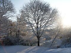 Snow_12609c