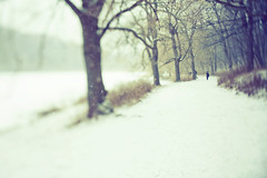 today (-stacey-) Tags: winter snow toronto highpark explore frontpage wwwstaceykinkaidcom