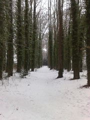 Treeline in Snow