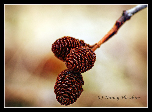 Earthy Brown by Nancy Hawkins