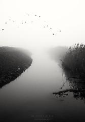 g r a y (swaily ◘ Claudio Parente) Tags: gray nikon nikond300 fog acqua swaily nebbia uccelli