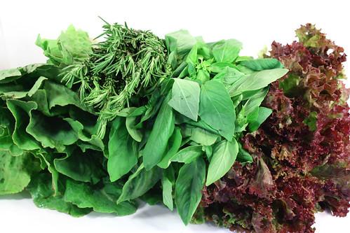 lettuce basil rosemary