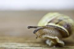 I leave a lovely opalescent ribbon (Lumase) Tags: wood macro nature bench poetry poem shell snail explore bishop montagna soe closer valgrande bej lumase anawesomeshot luigimasella