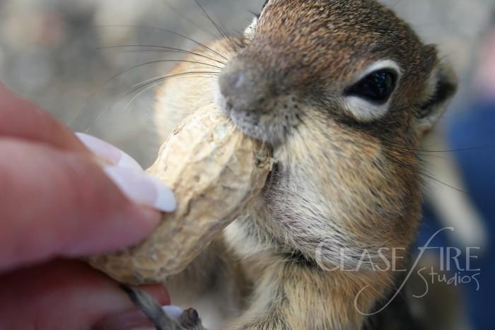 07-12-squirrels1