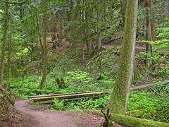 Trail (big loop)
