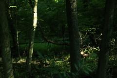 _MG_6190.JPG (zimbablade) Tags: hudsonriver chappaqua sleepyhollow videopoem