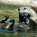 Woodland Park Zoo Seattle 086