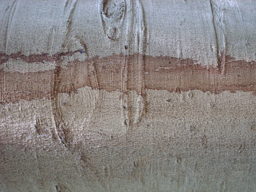 DesignM.ag Bark Texture - 10