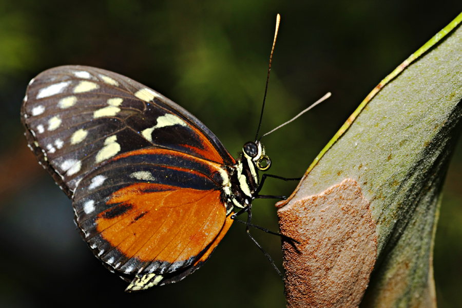Butterflies - close up shots | Photography Forum