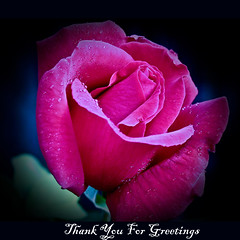 THANK YOU FOR HAPPY BIRTHDAY WISHES, MY DEAR FLICKR FRIENDS (ANVAR - RUSSIANTEXAN ) Tags: pink rose thankyou russiantexan forfriends nikonflickraward saariysqualitypictures anvarkhodzhaev russiantexas svetan svetanphotography