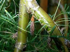 Insect (boisebluebird) Tags: flowers summer plants garden landscape design boise patio garening michaeltoolson boisebluebirdcom httpwwwboisebluebirdcom boiselandscaping boisegardener