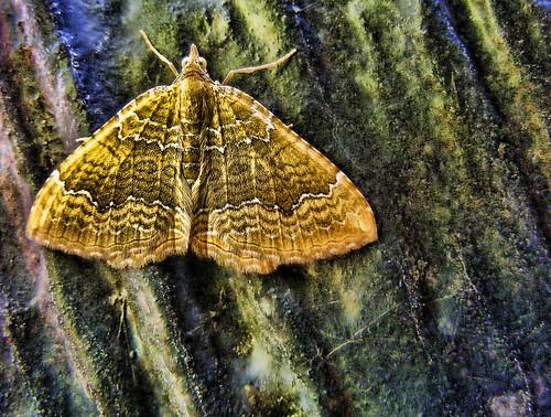 Moth, Topaz Adjust