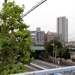 view from Edogawa river 02
