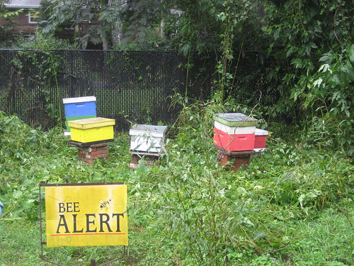 Active hives at the Oakhurst Community Garden