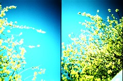 (Devils Gateway) Tags: spring lomo xpro lomography crossprocess blossoms toycamera lofi halfframe supersaturated plasticlens kodakelitechromeebx100 dianamini