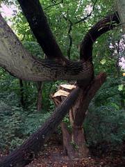 Mein Baum (cammino) Tags: baum
